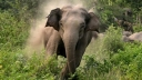 লোহাগাড়ায় বুনো হাতির আক্রমণে কৃষকের মৃত্যু