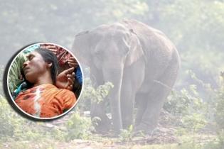 বান্দরবানে বন্যহাতির আক্রমণে নারীর মৃত্যু