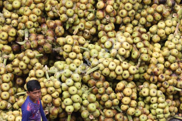 গরমে চাহিদা বেড়েছে সুস্বাদু ফল 'তাল'র