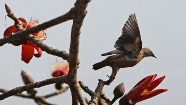 ফাগুনের পরশ আনছে প্রকৃতির ফুল-পাখি