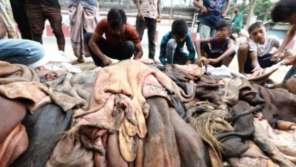 কেনা দামেও চামড়া কিনছে না আড়তদাররা, ফের বিপর্যয়ের শঙ্কা