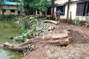 রাউজানে বিদ্যালয়ের শতবর্ষী গাছ কাটার অভিযোগ