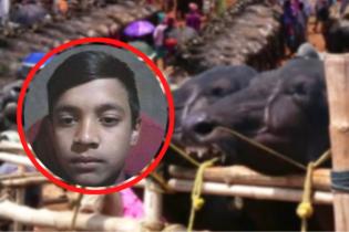 কোরবানির হাটে মহিষের আক্রমণে কিশোরের মৃত্যু বোয়ালখালীতে