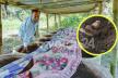 কেঁচোতে সফলতার মুখ দেখছেন রামগড়ের কাজী কালাম